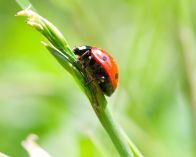 3143926 - close-up ladybird on blade, on green grass background