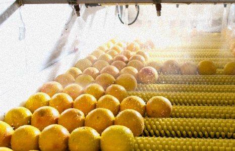 process-grapefruit@2x